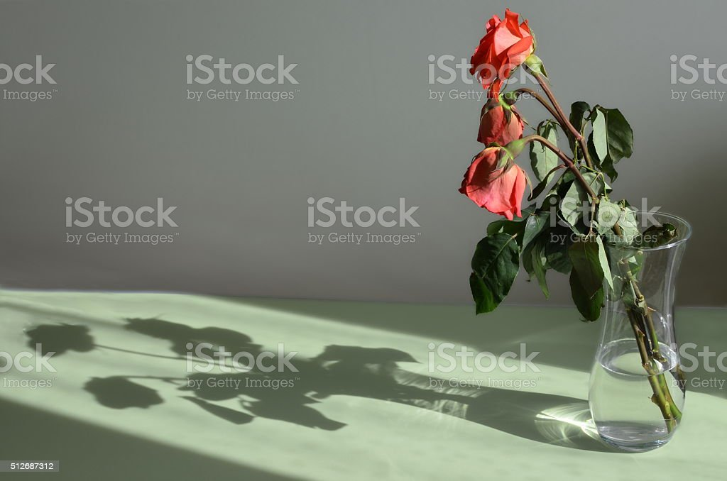 Three withered roses in a vase and its shadow stock photo