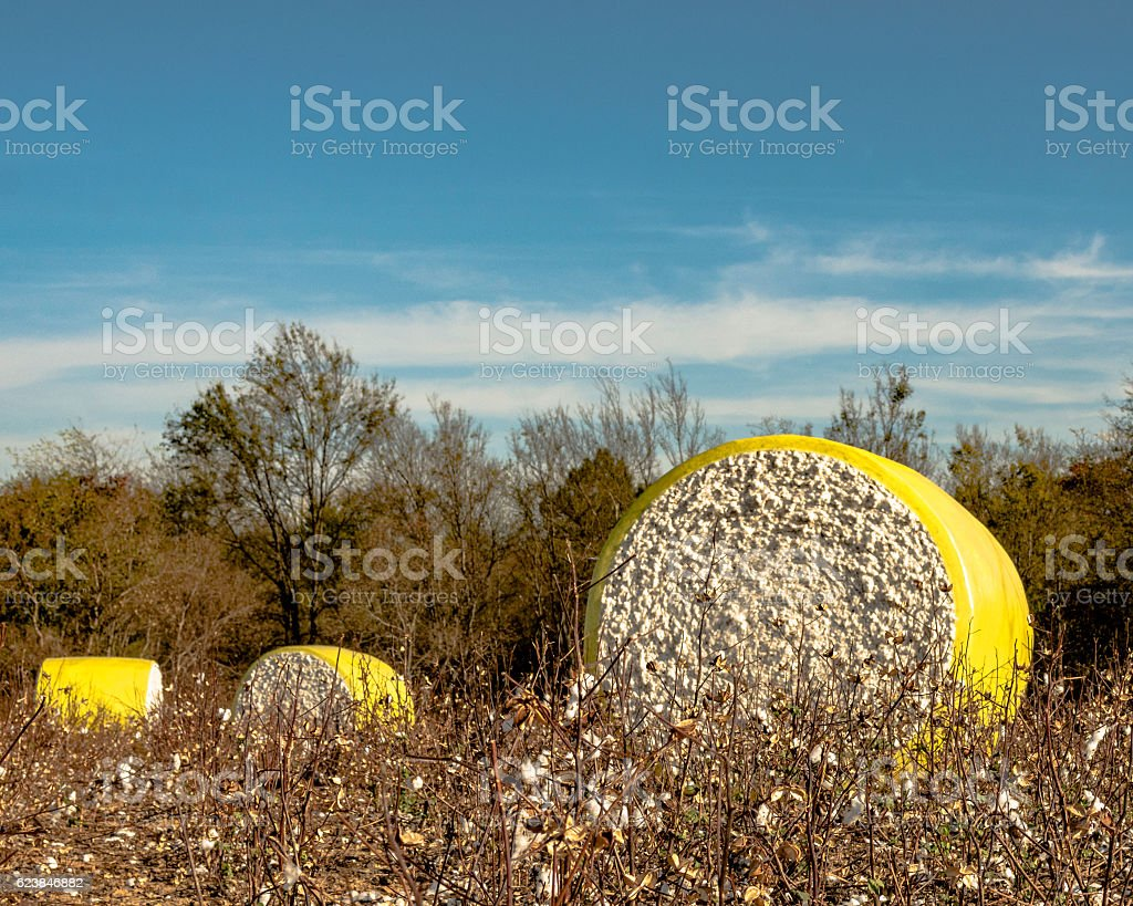 Three wrapped cotton bales in a harvested field stock photo