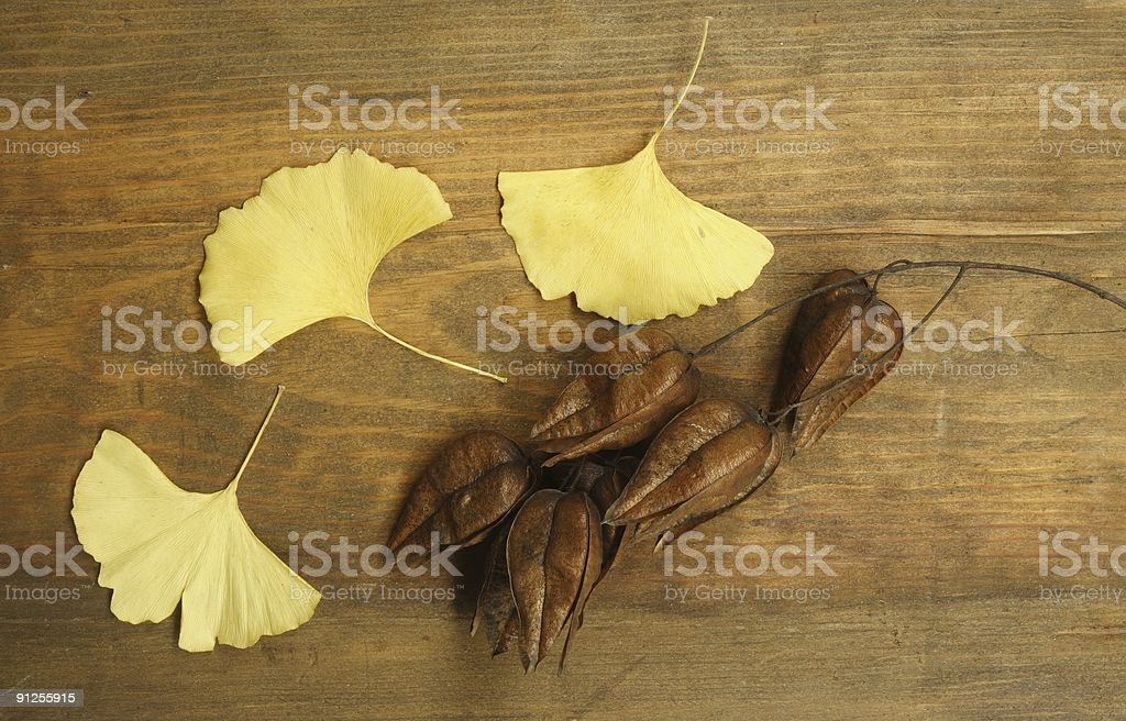 Three yellow leaves and Lantern Seed Pods royalty-free stock photo