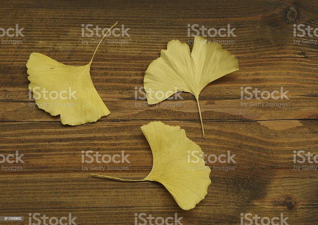 Three yellow leaves royalty-free stock photo