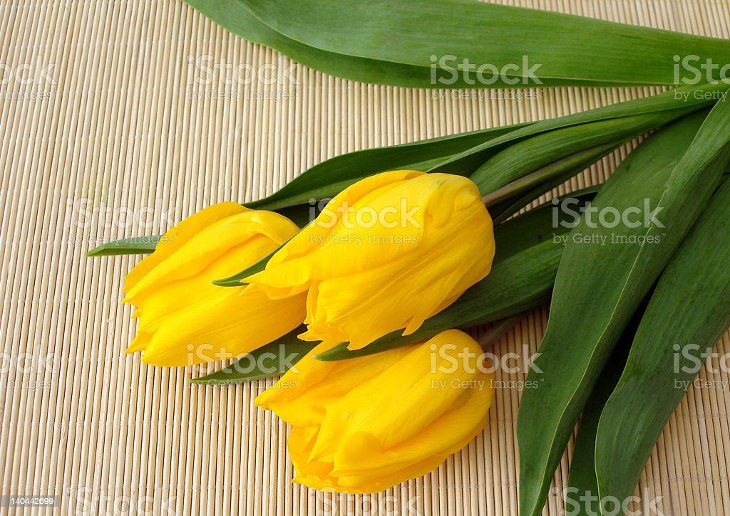 Túlipas de três amarelo palha matt foto de stock royalty-free