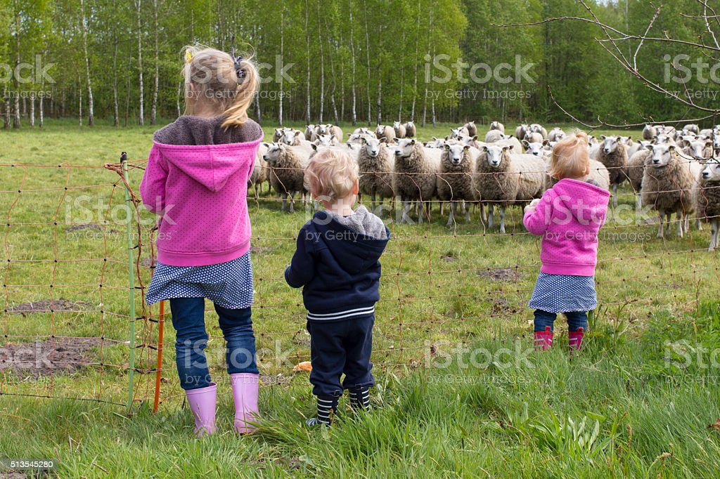 Three Young Children Looking At Herd Of Sheep stock photo