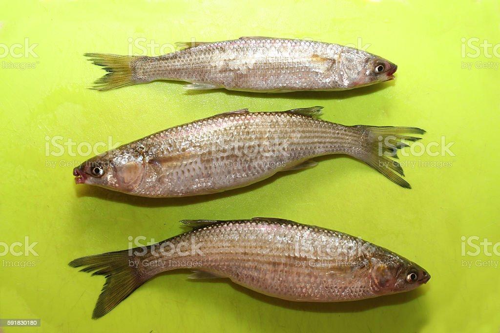 Three_Fish stock photo
