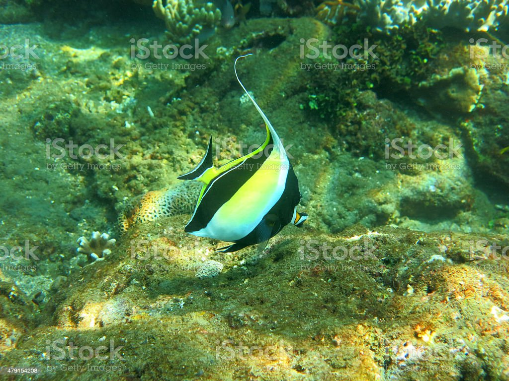 Thriving  coral reef alive with marine life and  tropical fish stock photo