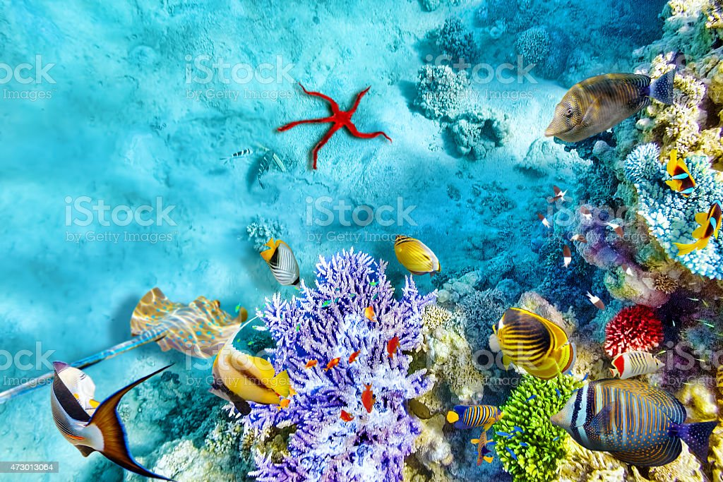 Thriving underwater world with corals and tropical fish stock photo