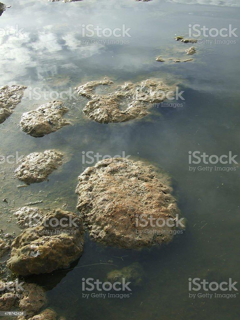 Thrombolites - early planetary organisms stock photo