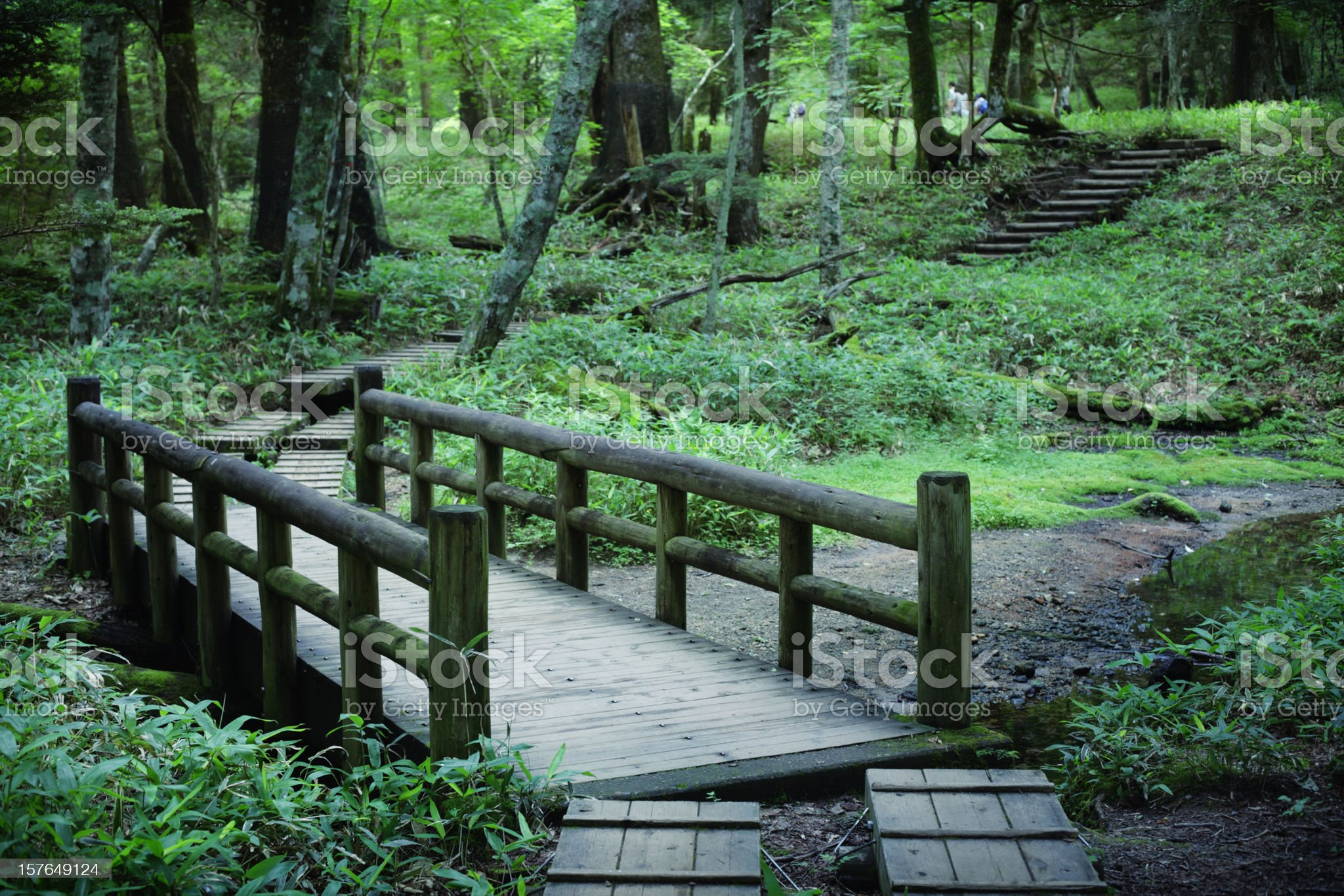 Through forest royalty-free stock photo