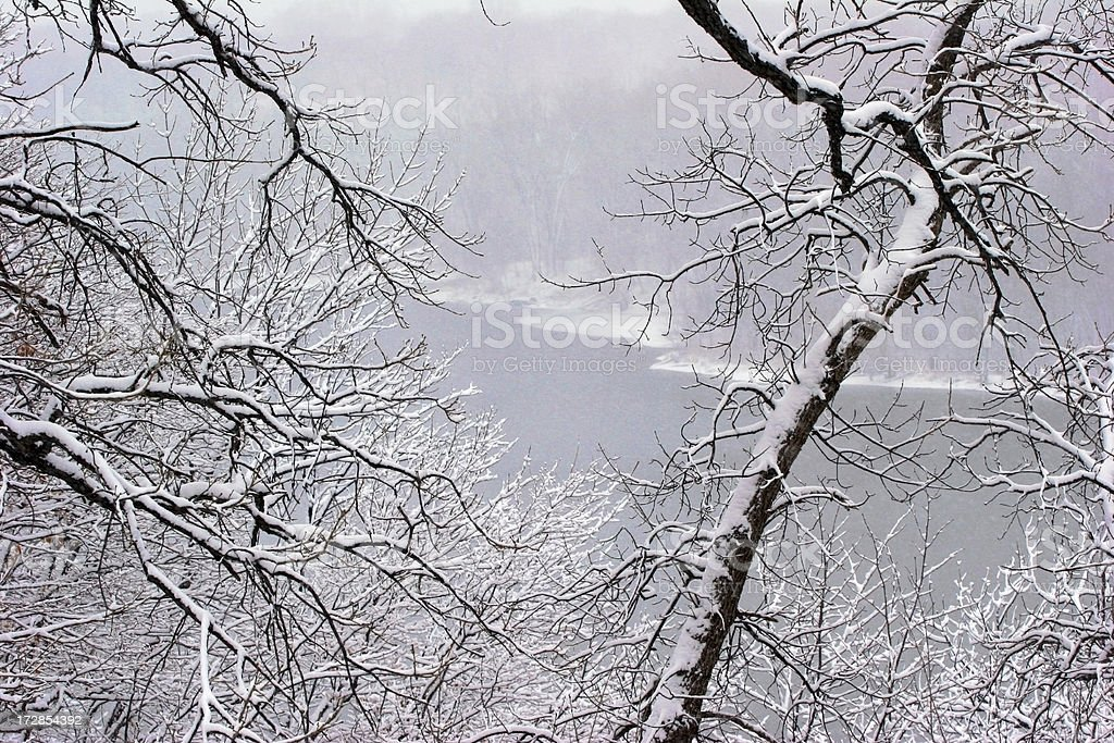 Through Snow Laden Branches royalty-free stock photo
