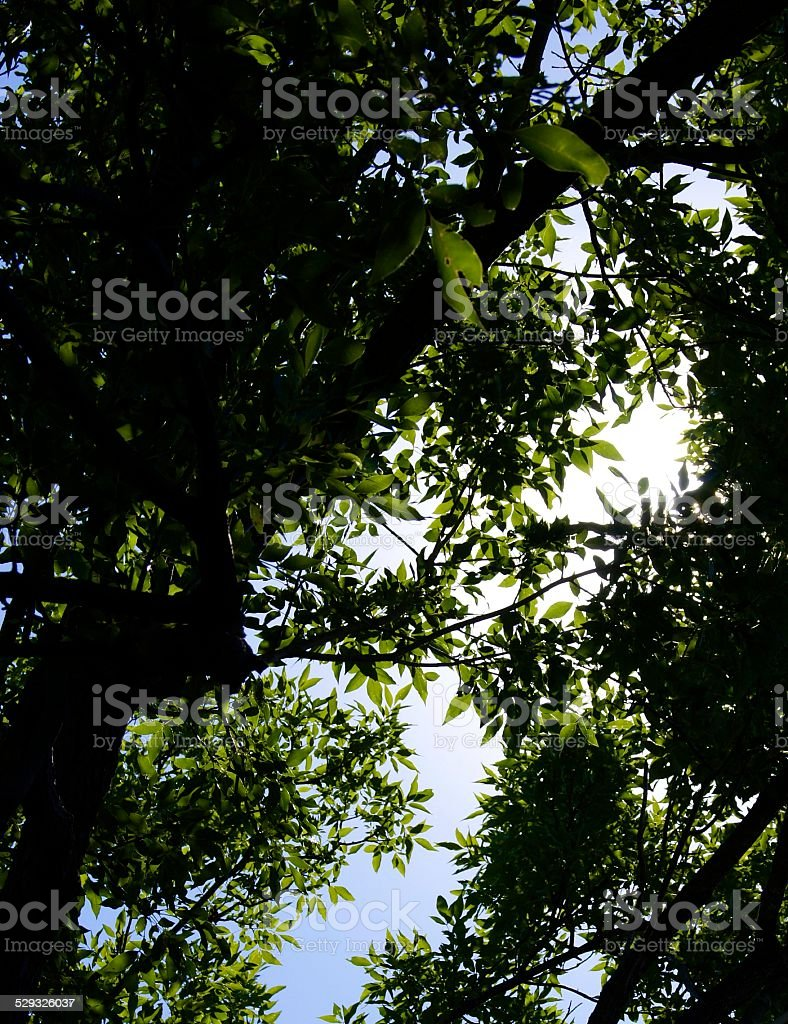 Through the Branches royalty-free stock photo