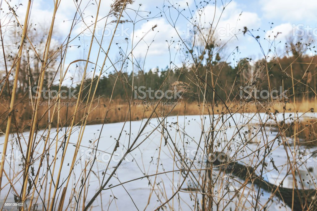 Through the dry yellow grass, a snow-covered lake, a forest and a cloudy clear sky, in retro style stock photo