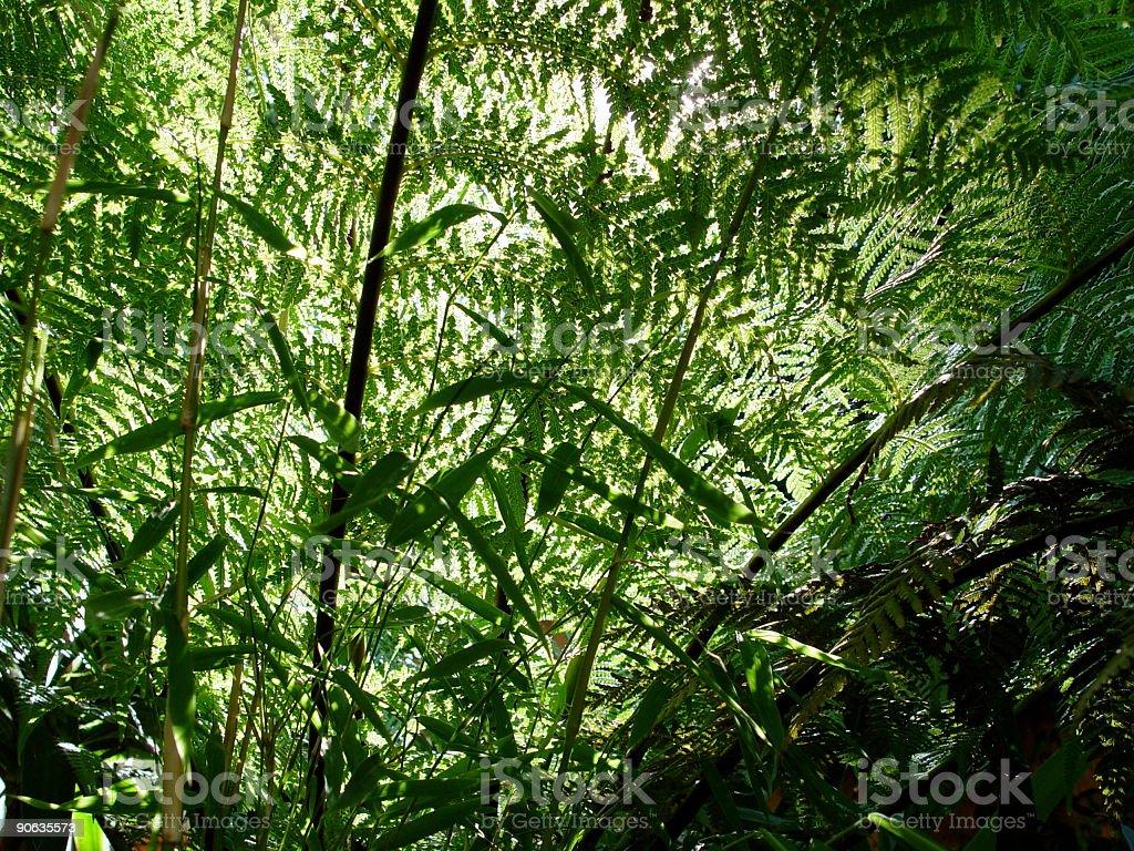 Through the Jungle stock photo