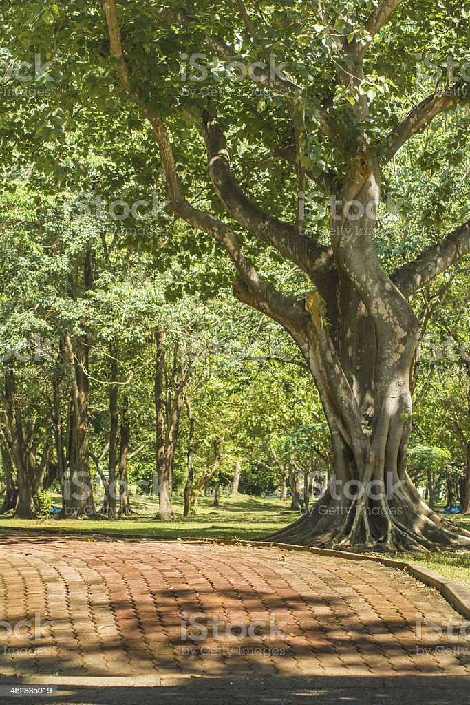 Through the park for jogging or rest royalty-free stock photo