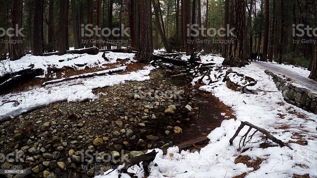 Through the snow stock photo