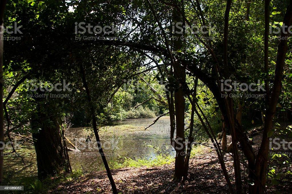Through the trees royalty-free stock photo