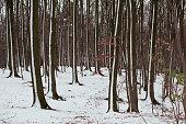 Through the Winter woodland, Denmark