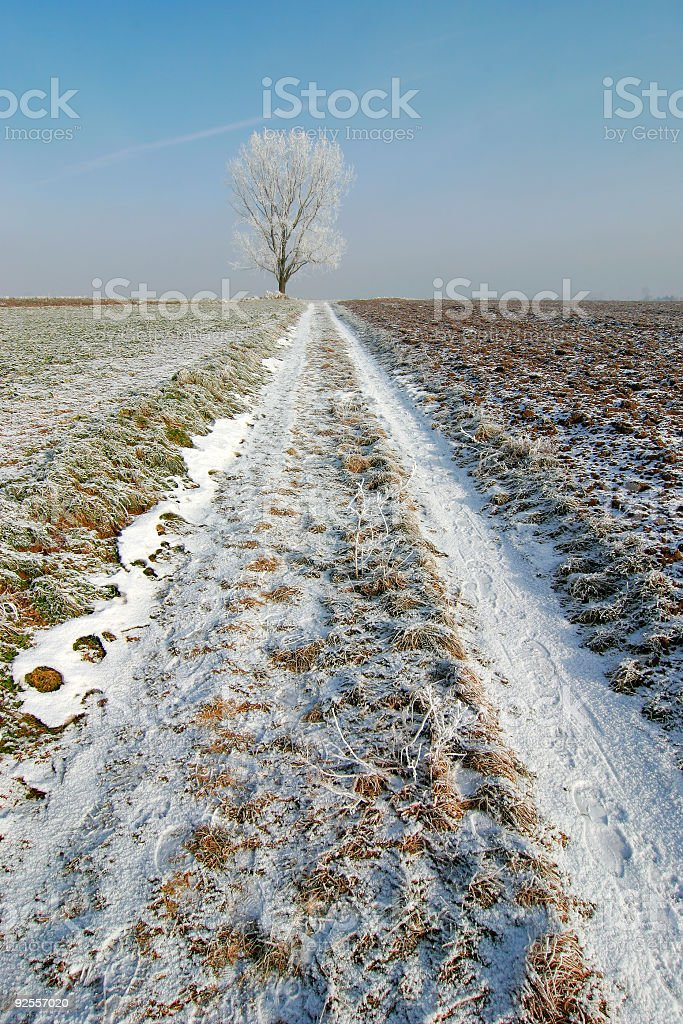 Through Winter Fields royalty-free stock photo