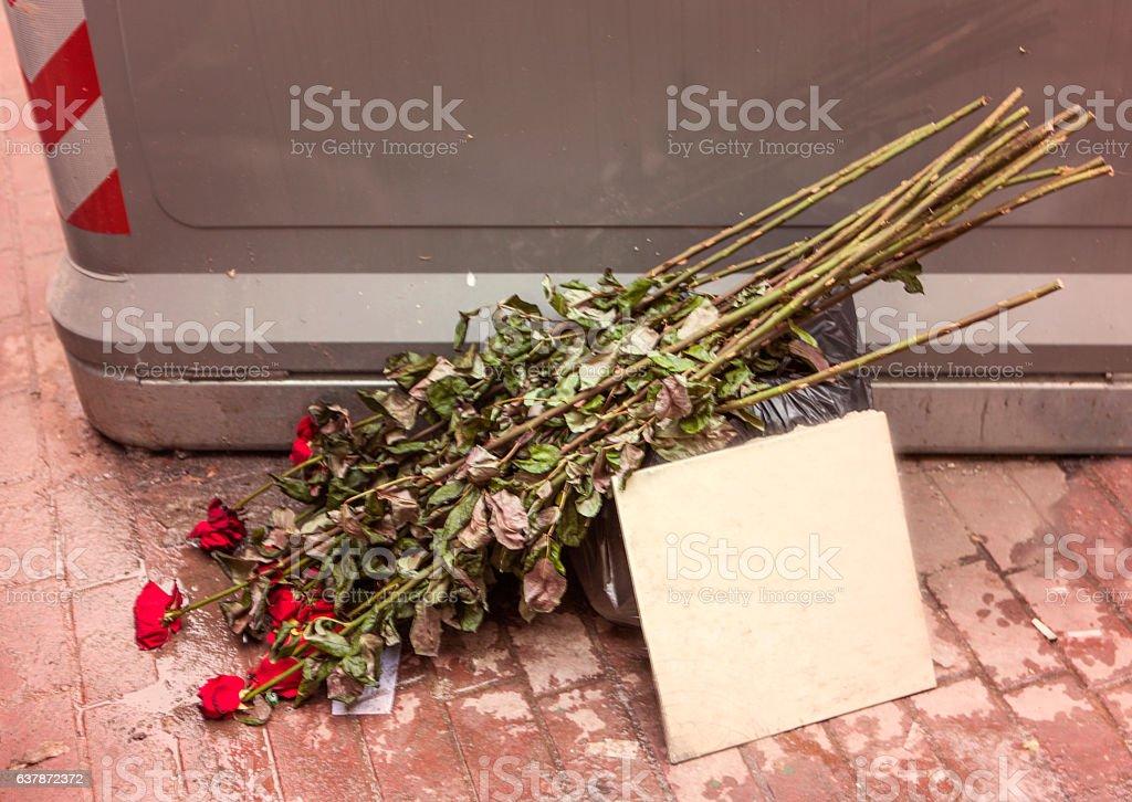 thrown red roses bouquet at garbage bin at lviv ukraine stock photo