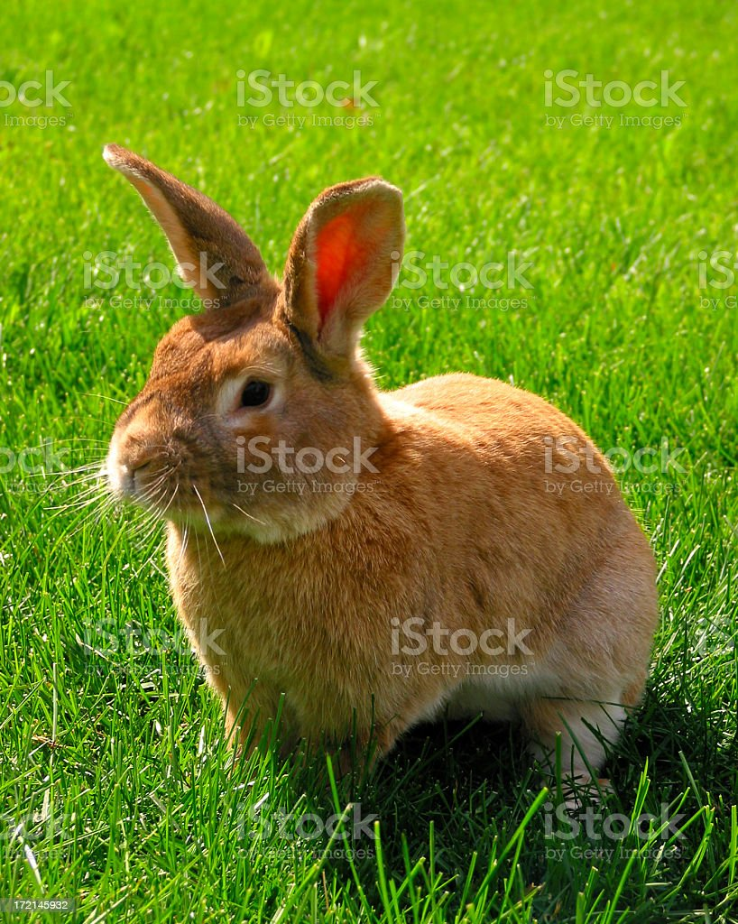 thumper stock photo