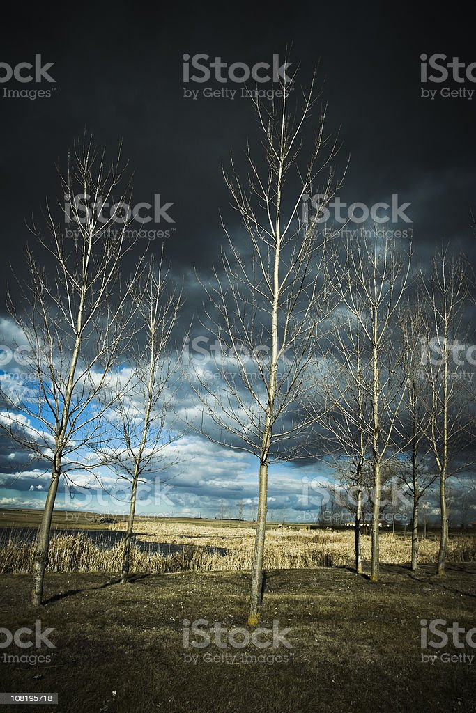 Thunderstorm and Trees in Field royalty-free stock photo
