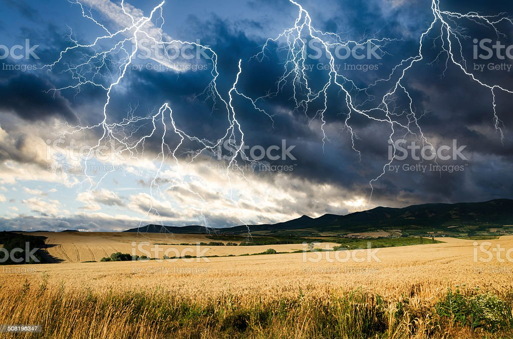 thunderstorm with lightning in wheat land stock photo
