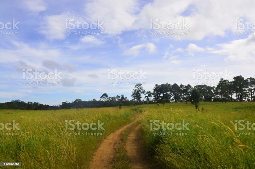 Thung Nang Phaya is a meadow area of the park stock photo
