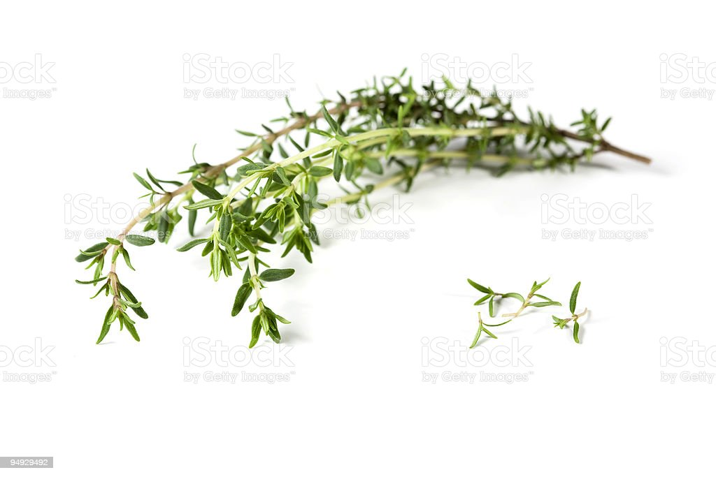 thyme branch and leaves royalty-free stock photo