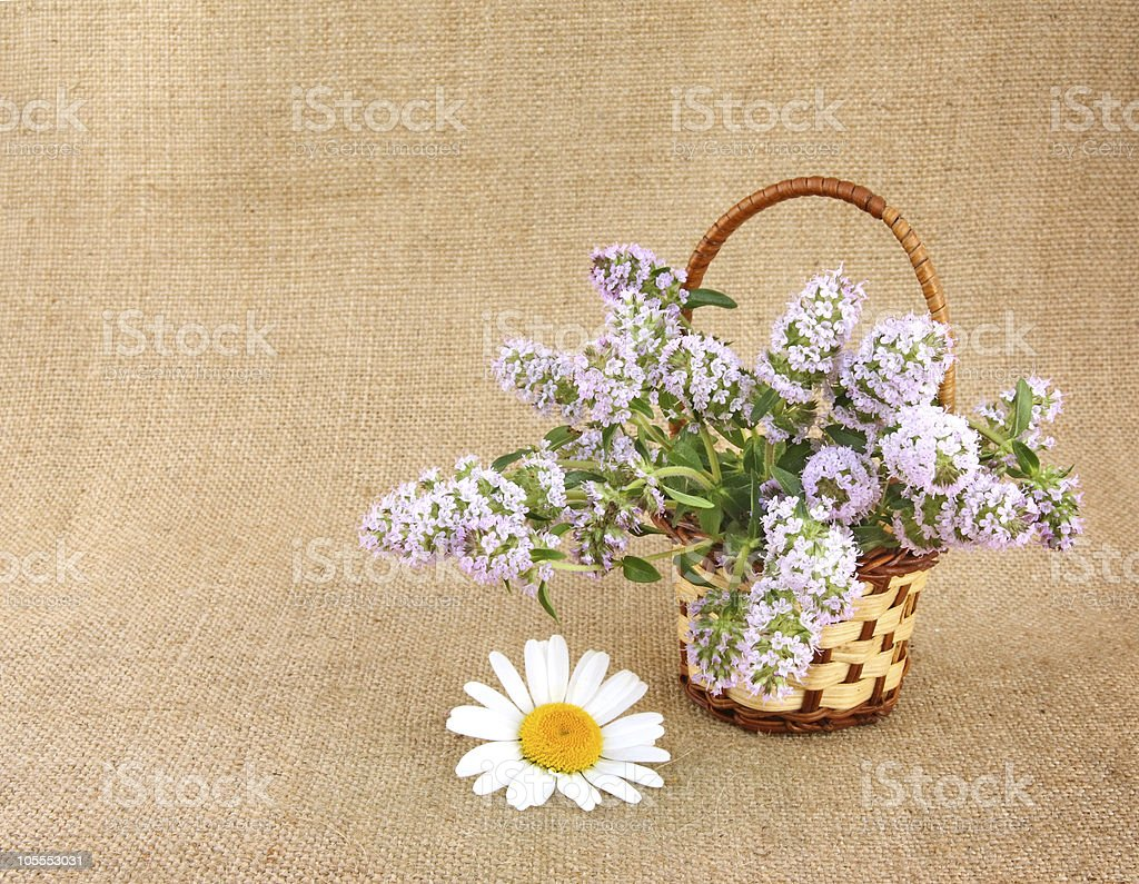 Thyme bunch in basket royalty-free stock photo