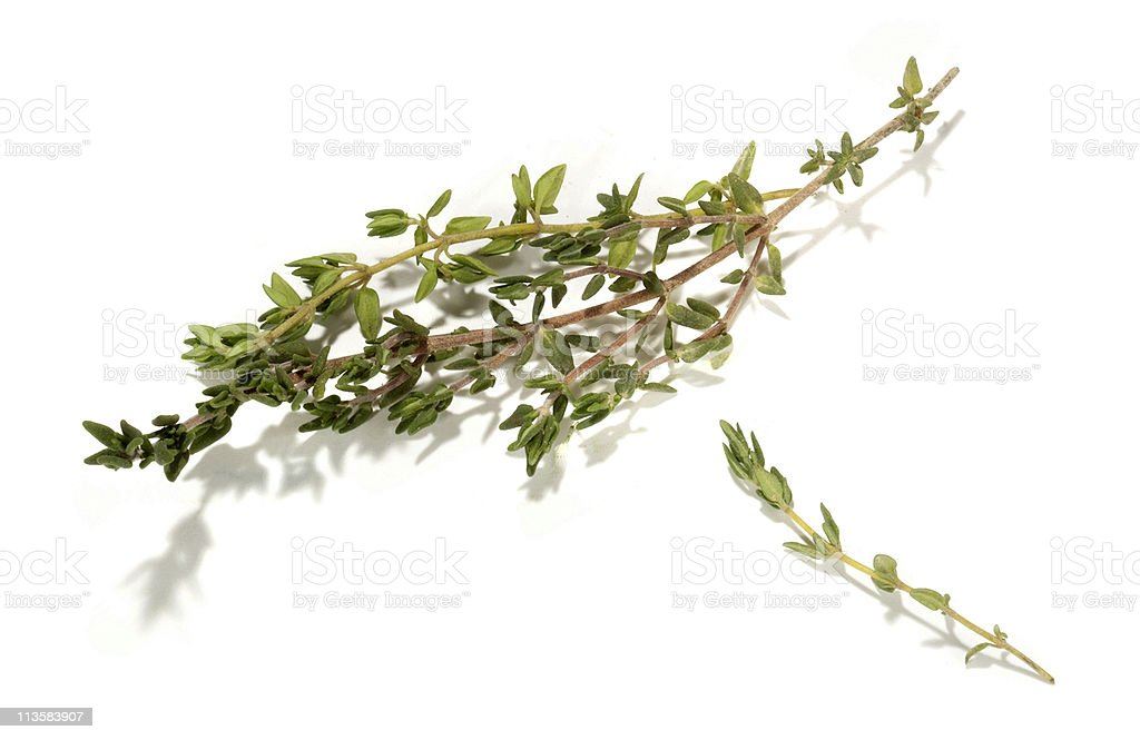 Thyme cut out on white stock photo