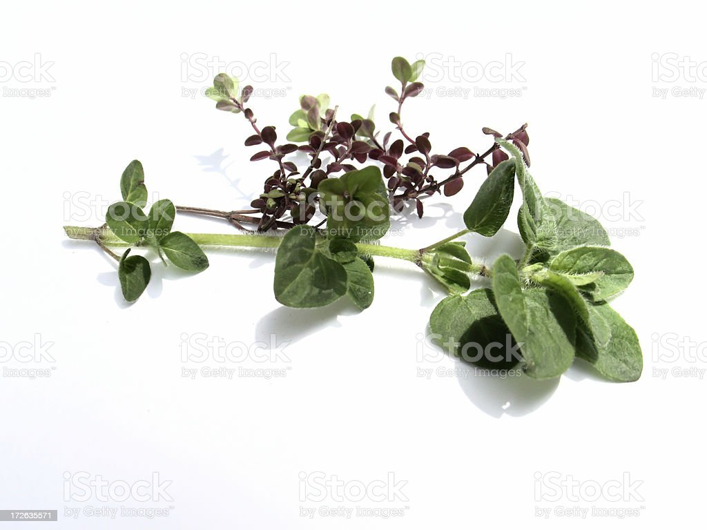 Thyme for Oregano royalty-free stock photo
