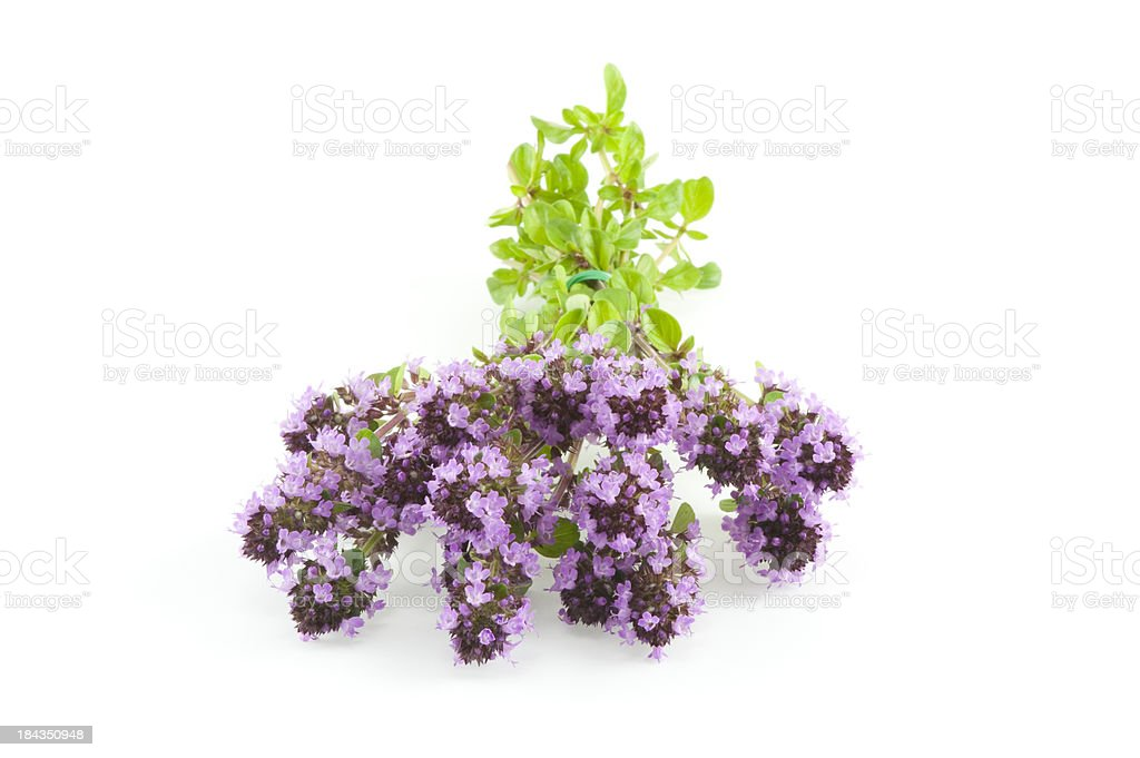 Thyme herb flowers royalty-free stock photo