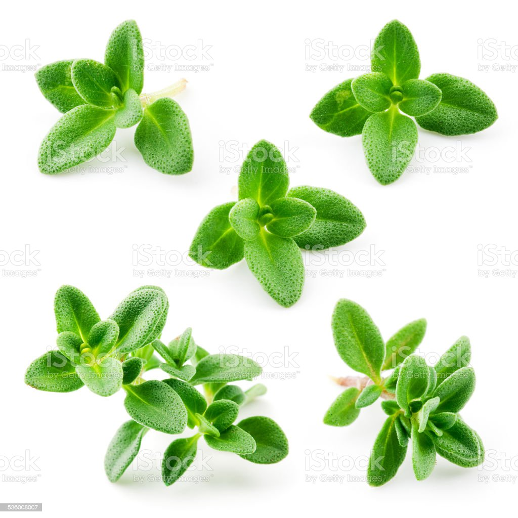 Thyme isolated on white background. Macro stock photo