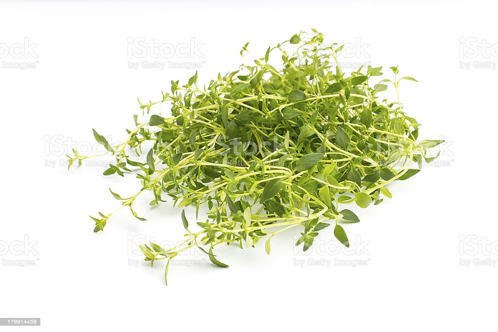 Thyme. royalty-free stock photo