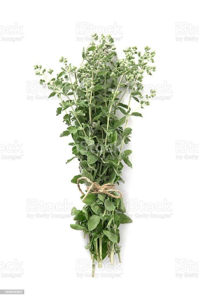 Thyme stock photo
