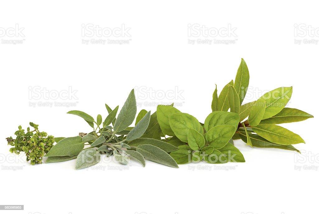 Thyme, Sage, Oregano and Bay Herbs royalty-free stock photo