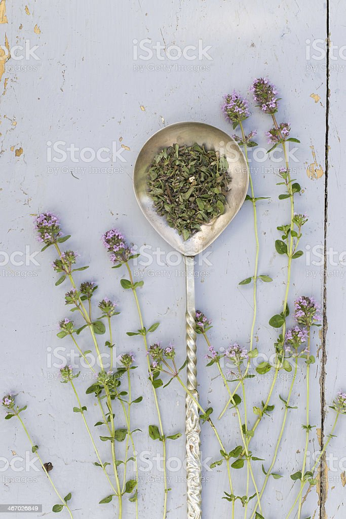 Thyme sprigs royalty-free stock photo
