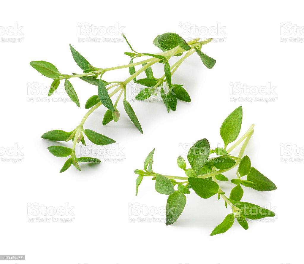 Thyme Twigs stock photo