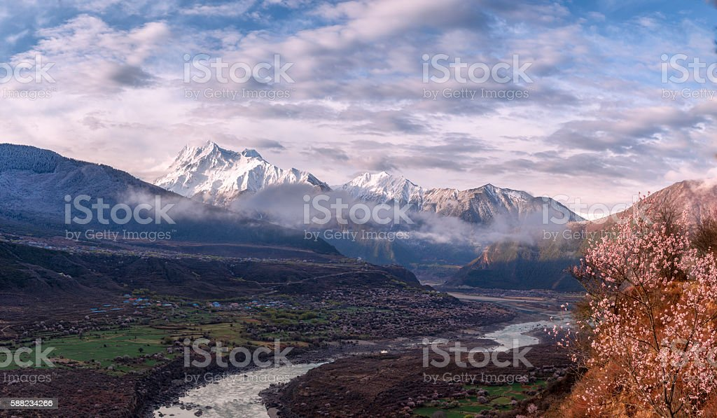 Tibet in the peach blossom stock photo