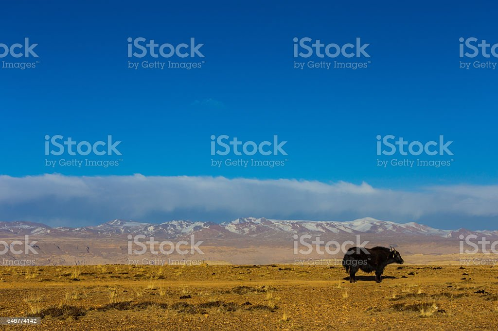 Tibet landscape, Tibet, China. stock photo
