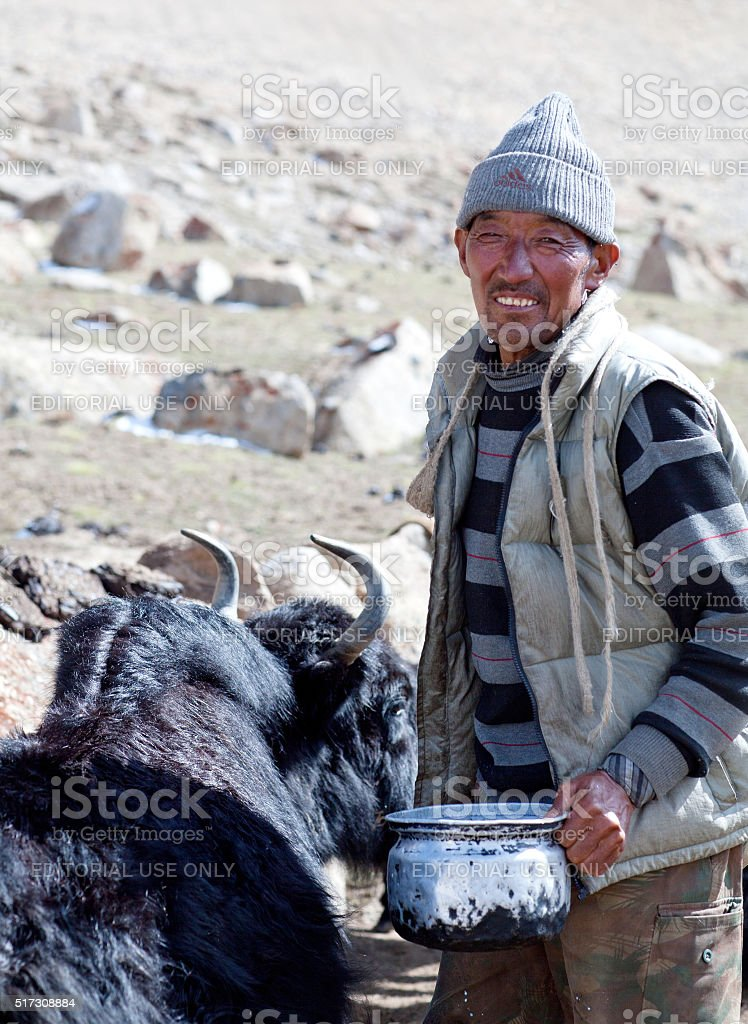 Tibetan nomad with yak in Ladakh, North India stock photo