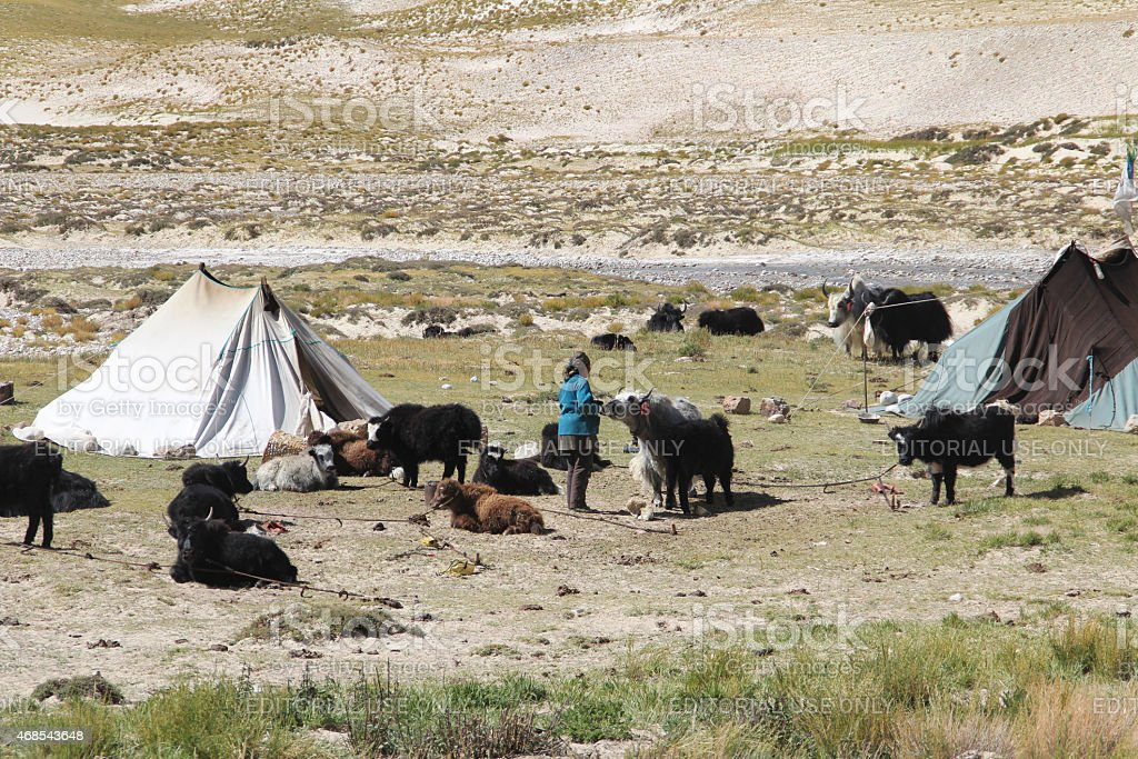 Tibetan nomadic tent with yaks stock photo