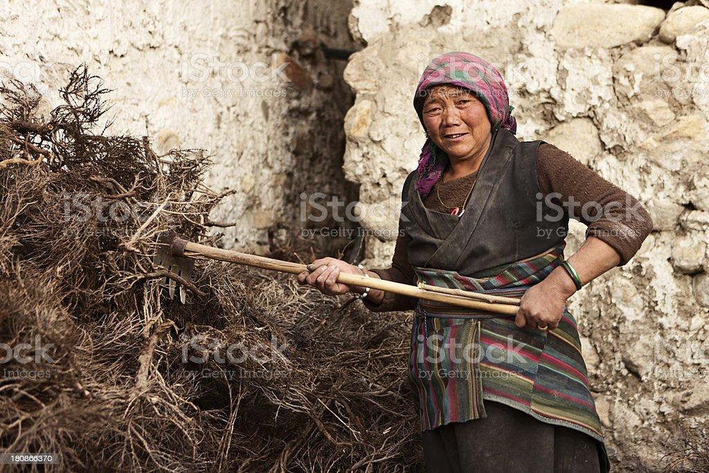 Tibetan woman at work royalty-free stock photo