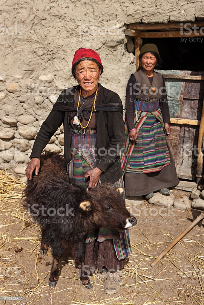 Tibetan woman holding a young yak, Upper Mustang. Nepal stock photo