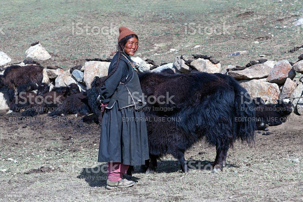Tibetan woman with yak in Ladakh, North India stock photo