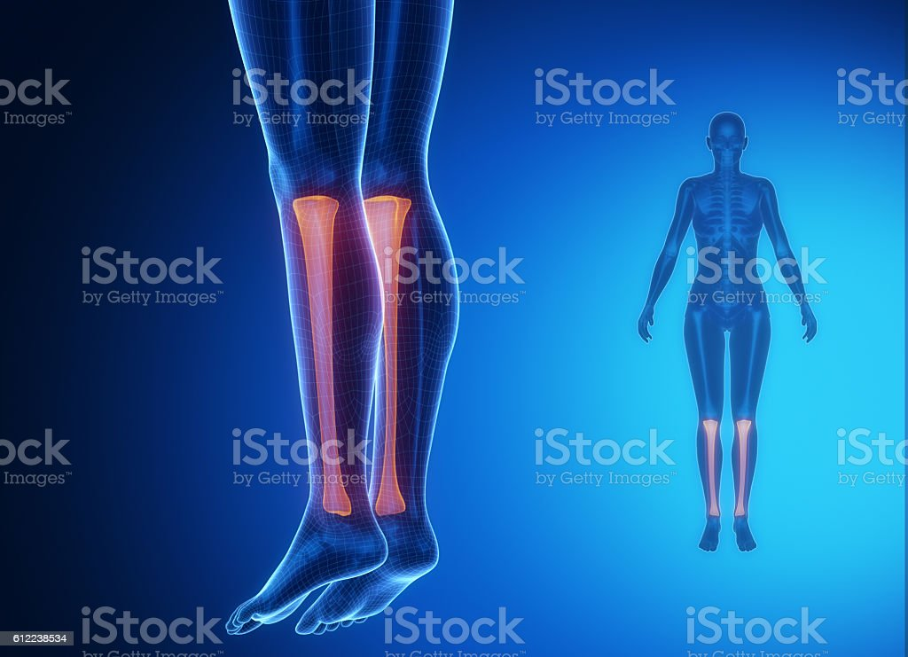 Tibia anatomy medical scan stock photo