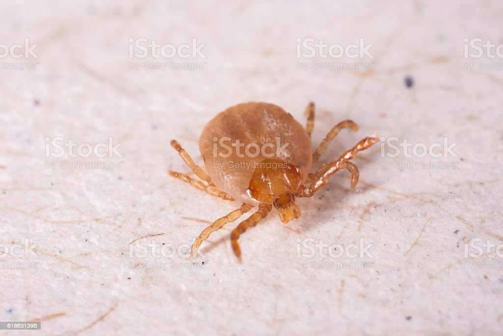 Tick in white background stock photo