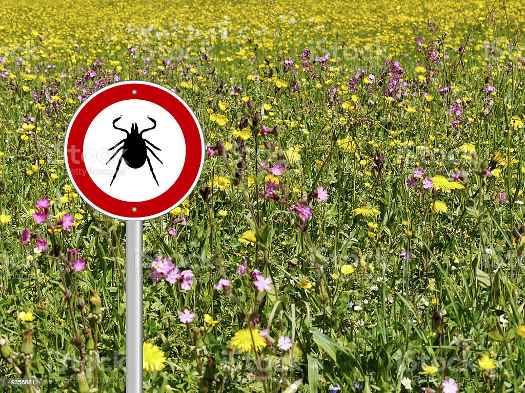 tick sign in flower meadow stock photo