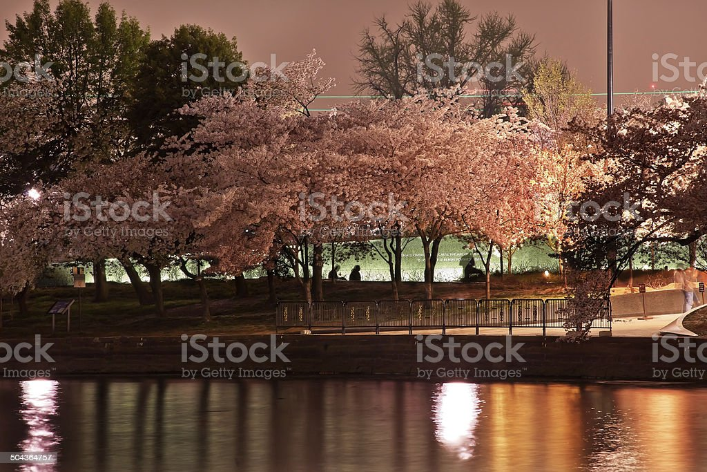 Tidal Basin Cherry Blossoms Martin Luther King Memorial Evening stock photo