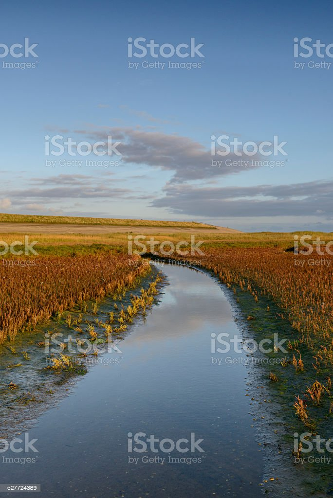 Tidal creek in the Waddensea stock photo