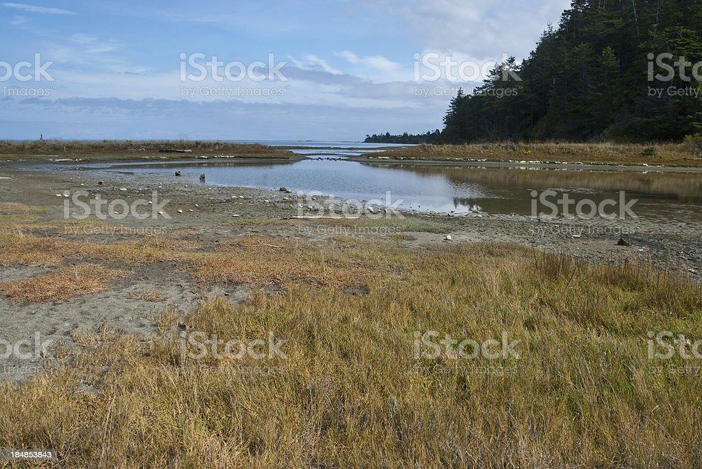 Tidal Marsh stock photo
