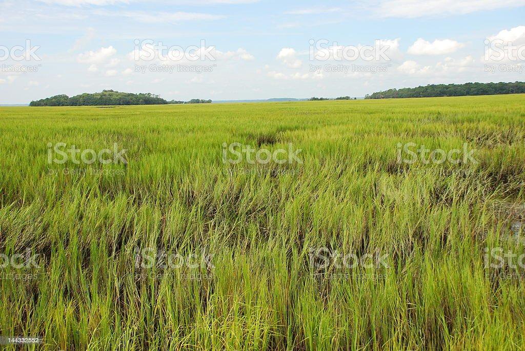 Tidal Marsh Wetlands royalty-free stock photo